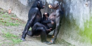 Animal Sex - Free collections of animal sex Free porn with animals - Farm Zoo Sex