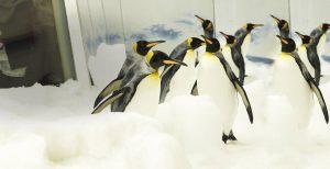 aquarium-penguins