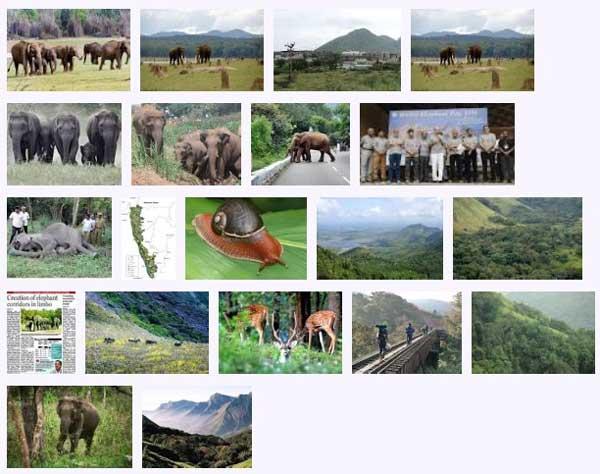 west_ghats_ecology_animals_screenshot_01