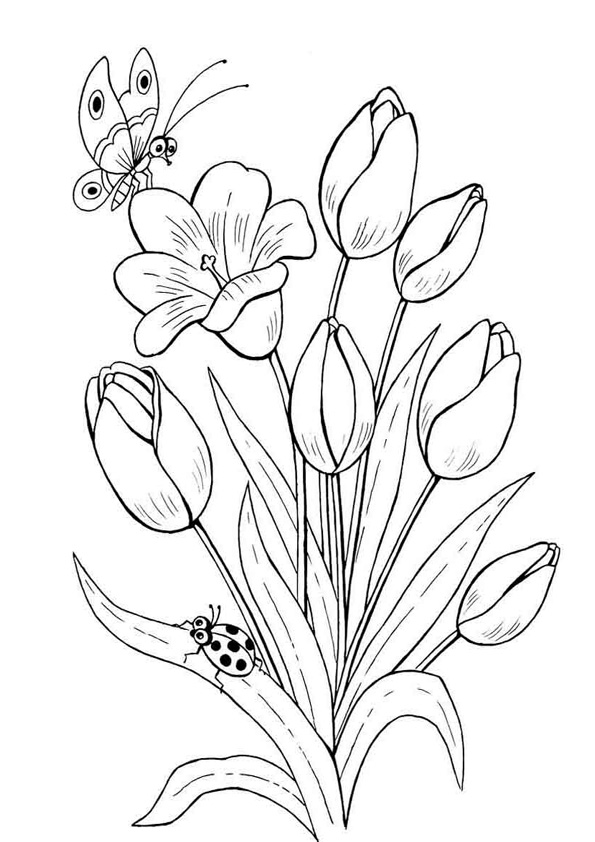 Coloring Pages Tulip Flower Printable Coloring Pages