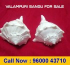 Valampuri Sangu for Sale