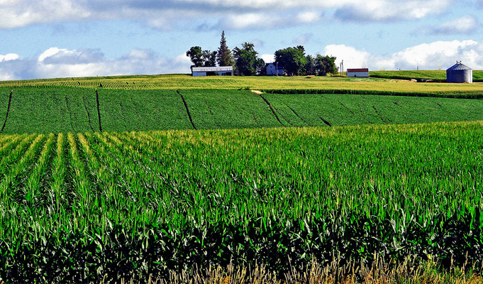 'GM crops safe but not ultimate solution'