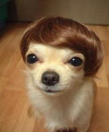 Cheesy Toupee Meets Adorable Dog.  Actually, this dog looks better than I did with a toupee!