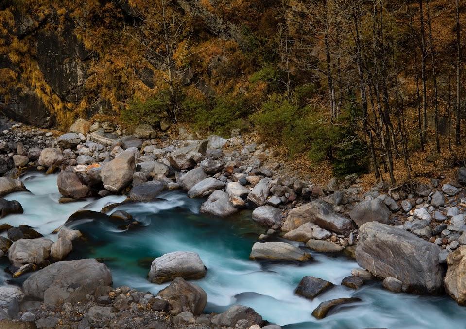 Sacred Forest river