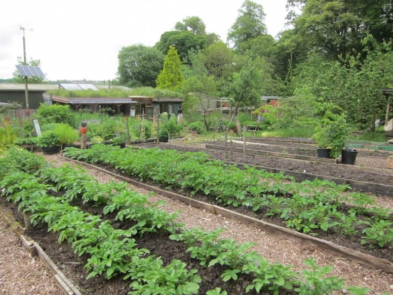 Offshoots veg rows walter siegel build in background