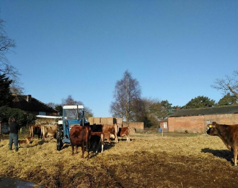 Calf at Foot Dairy