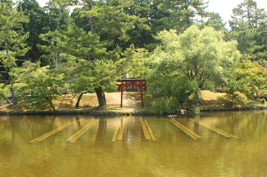Giappone templi nara cervi giapponese (13)