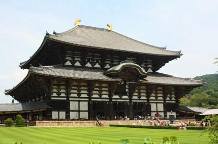 Giappone templi nara cervi giapponese (14)