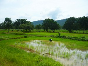 viaggio in cambogia 2