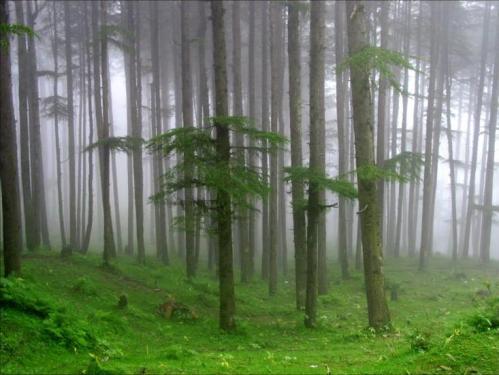 In Kinnaur la foresta è il regno di spiriti ed entità sovrannaturali