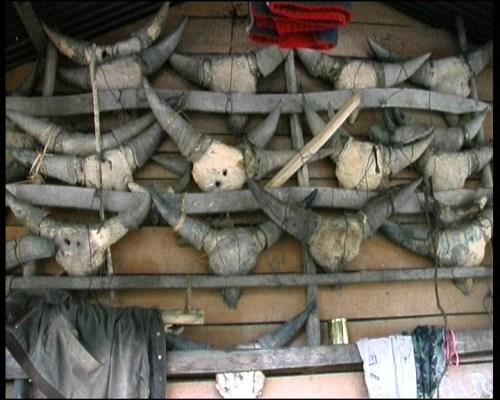 Crani di mithun sacrificali all'esterno di una palafitta