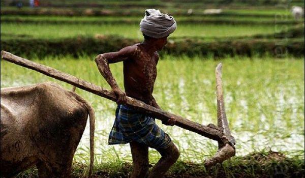 Ancora suicidii tra i contadini indiani. I numeri di un'ergenza senza fine
