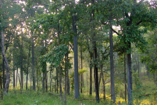 भारत में जंगल सफारी – कब, कहाँ, क्या और कैसे देखें?   Inditales