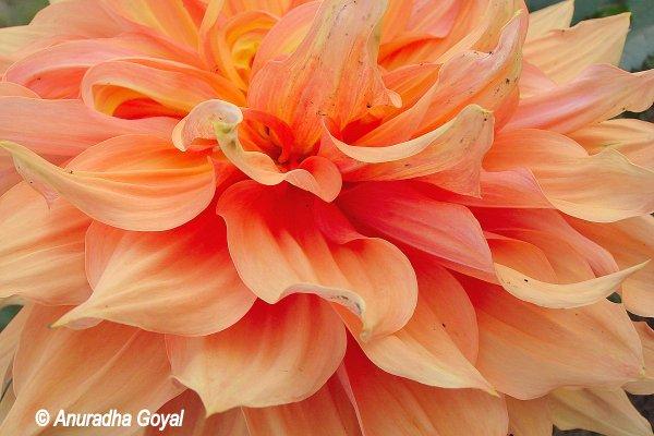 बिहार जे खिलखिलाते फूल