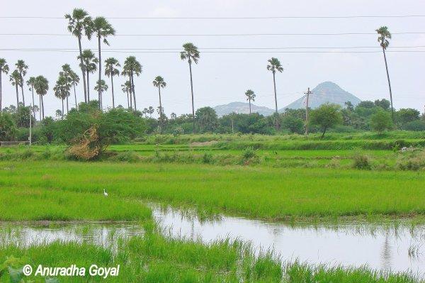 वारंगल दुर्ग के रास्ते पे