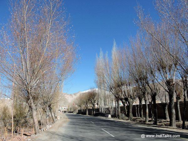 सर्दियों में लद्दाख के वृक्ष एवं सड़कें