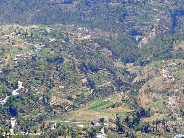 सीढ़ीदार पहाड़ी खेत - मुक्तेश्वर