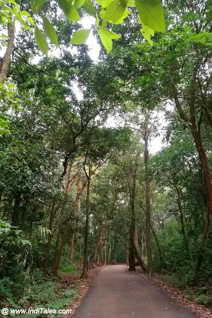 उत्तर कन्नड़ की वनों से घिरी संकरी सड़कें