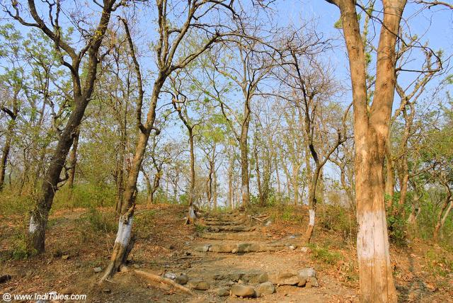 कण्वाश्रम के आस पास वन मार्ग