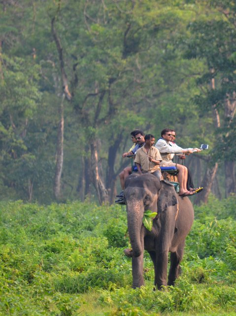 हाथी पर जंगल सफारी