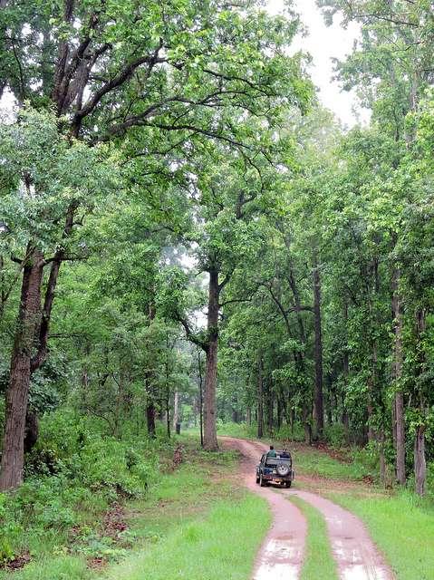 कान्हा राष्ट्रीय उद्यान में जीप सफारी