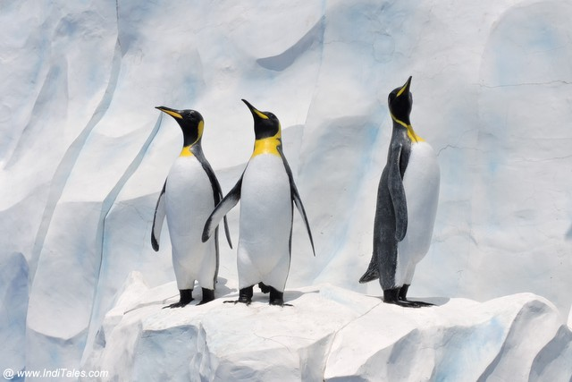 Penguins in ocean park