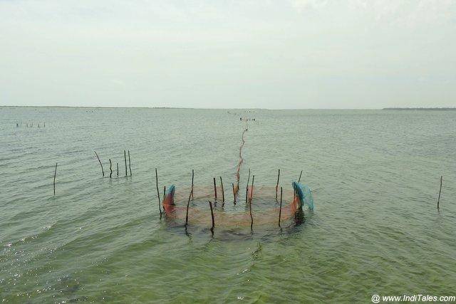 मछली पकड़ने का जाल - जाफना