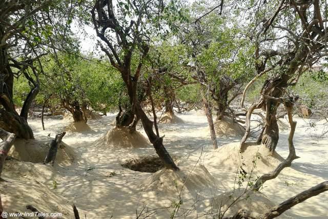 निधि वन के पेड़