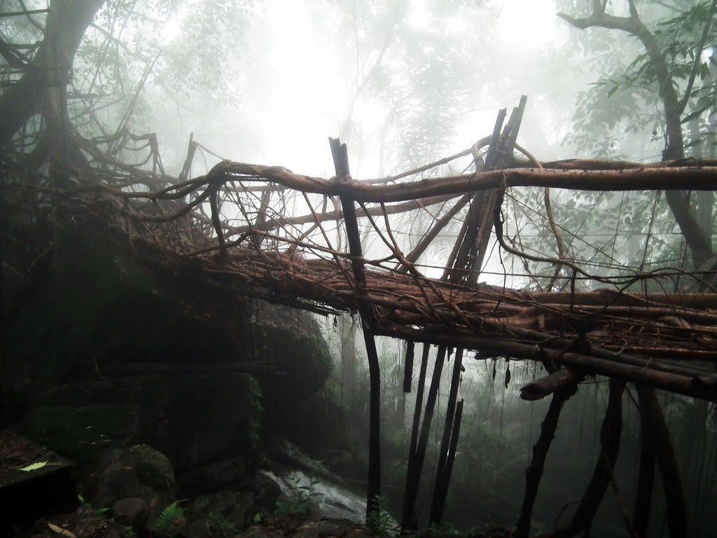 Living root bridges meghalayaa
