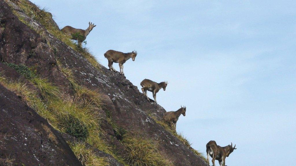 Mukurthi National Park