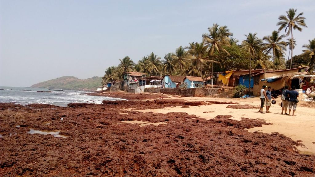 Anjuana Beach Goa
