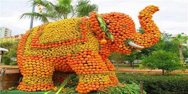 Orange festival at Tripura