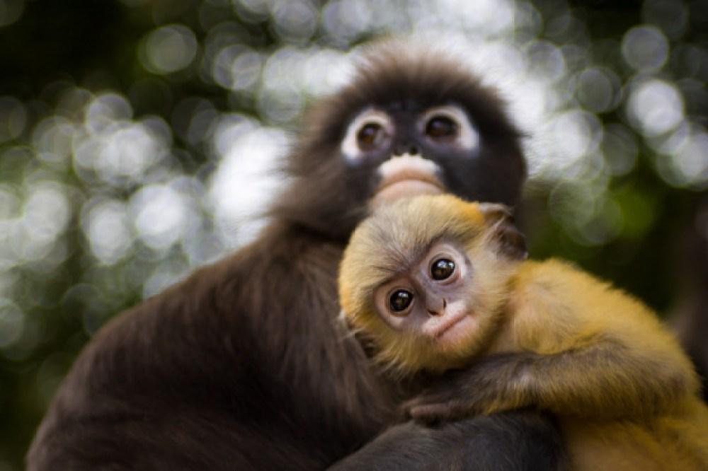 Wildlife Sanctuary in Tripura