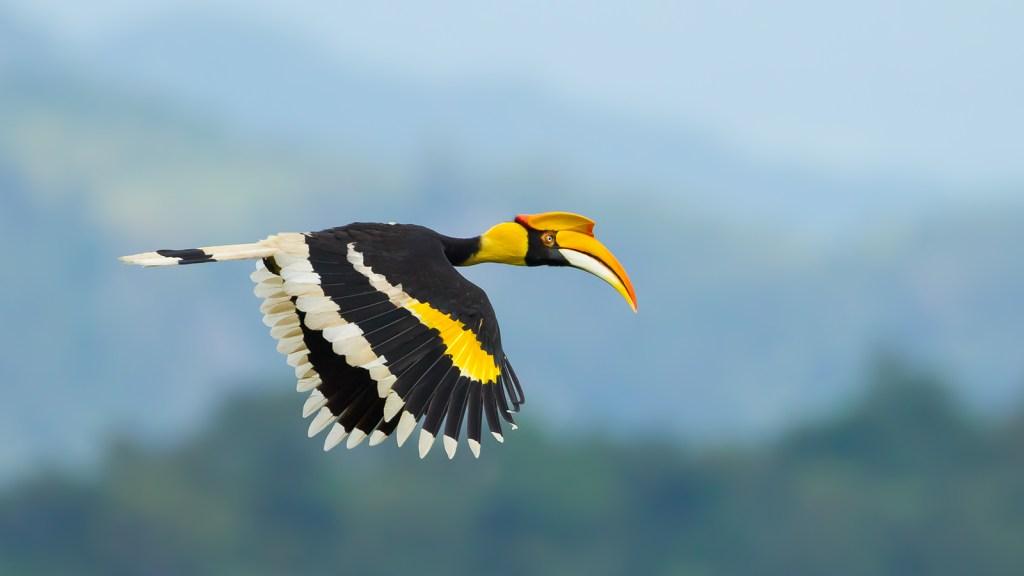 Flora And Fauna of Arunachal Pradesh