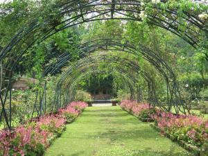 Kebun Mawar Situhapa Garut Indonesia A-Z