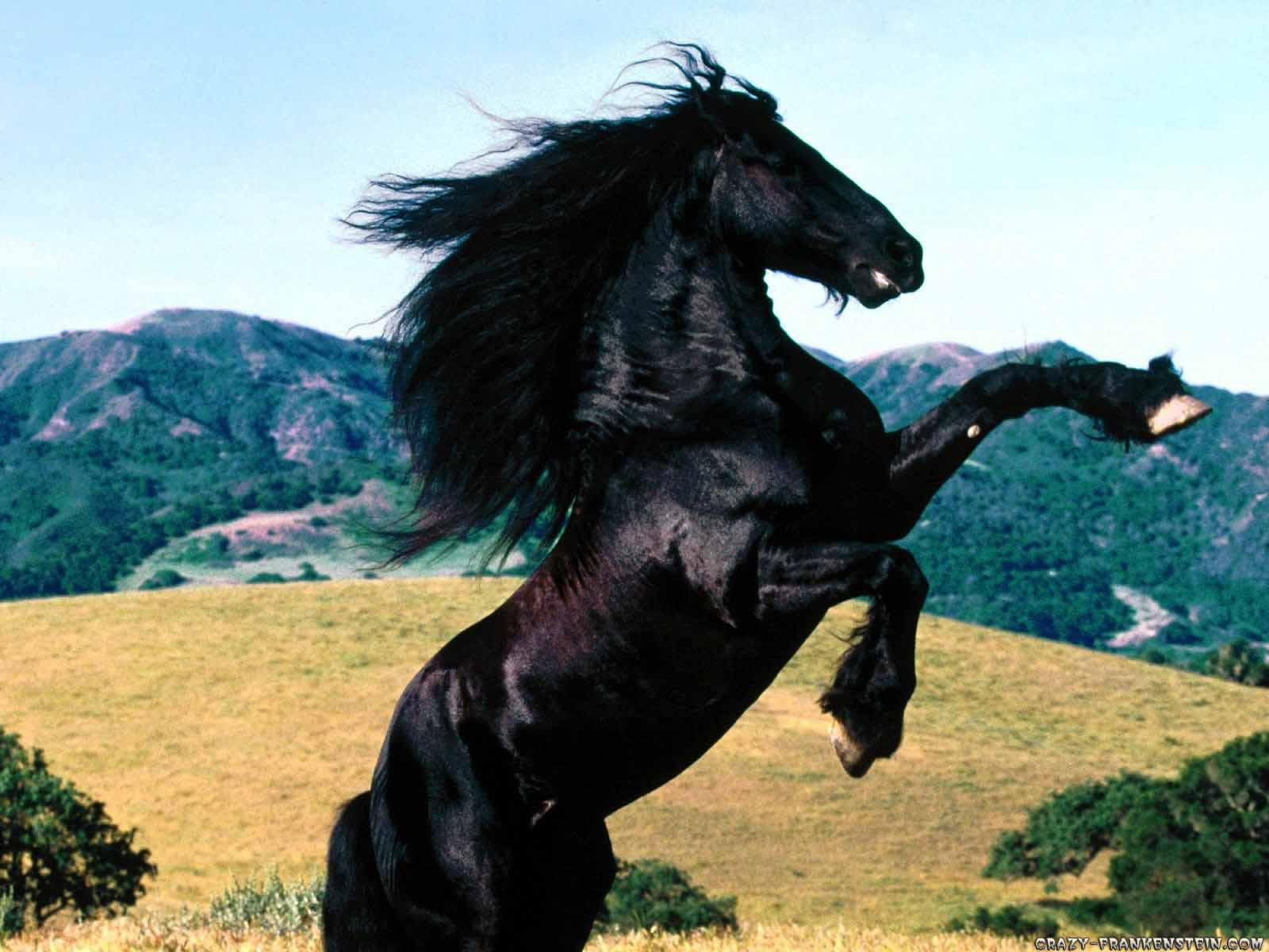 Horse-Wallpaper-On-Desktop