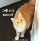 cat keeps meowing for no reason