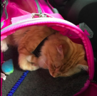 Can A Cat Be A Service Animal?