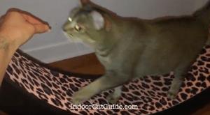 cat wheel reviews