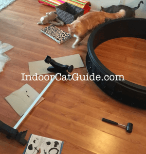 cat exercise wheel review