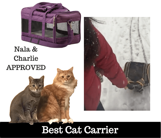 best cat carrier for airplane