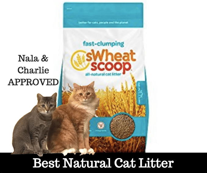 best natural cat litter
