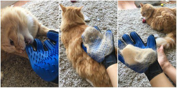 cat shedding glove