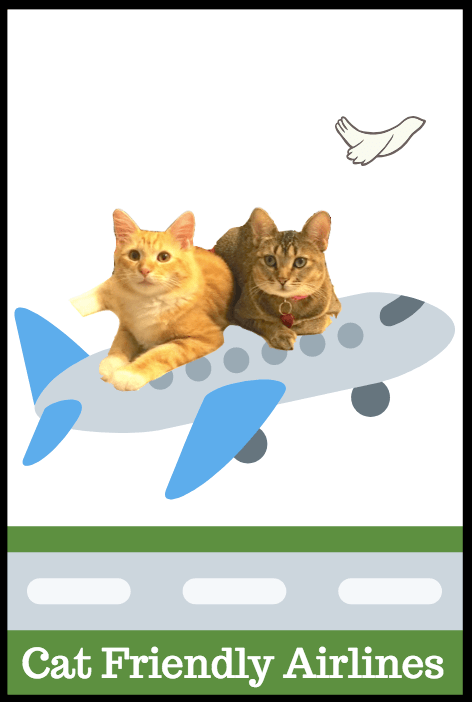 cat friendly airlines