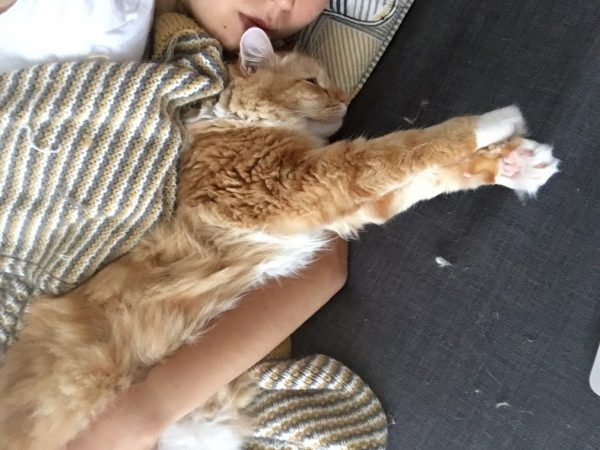 how to raise a cuddly cat
