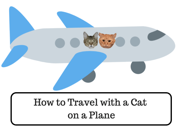 how to travel with a cat on a plane