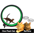 one fast cat exercise wheel review (thumb)