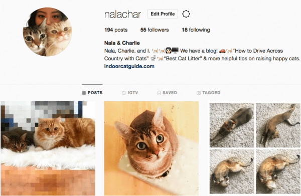 How to Make Your Cat Instagram Famous