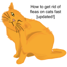 how to get rid of fleas on cats fast