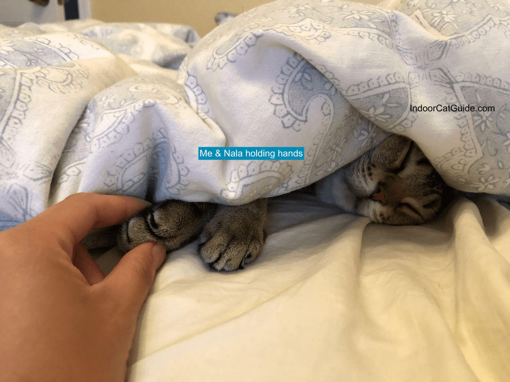 how to make your cat cuddle